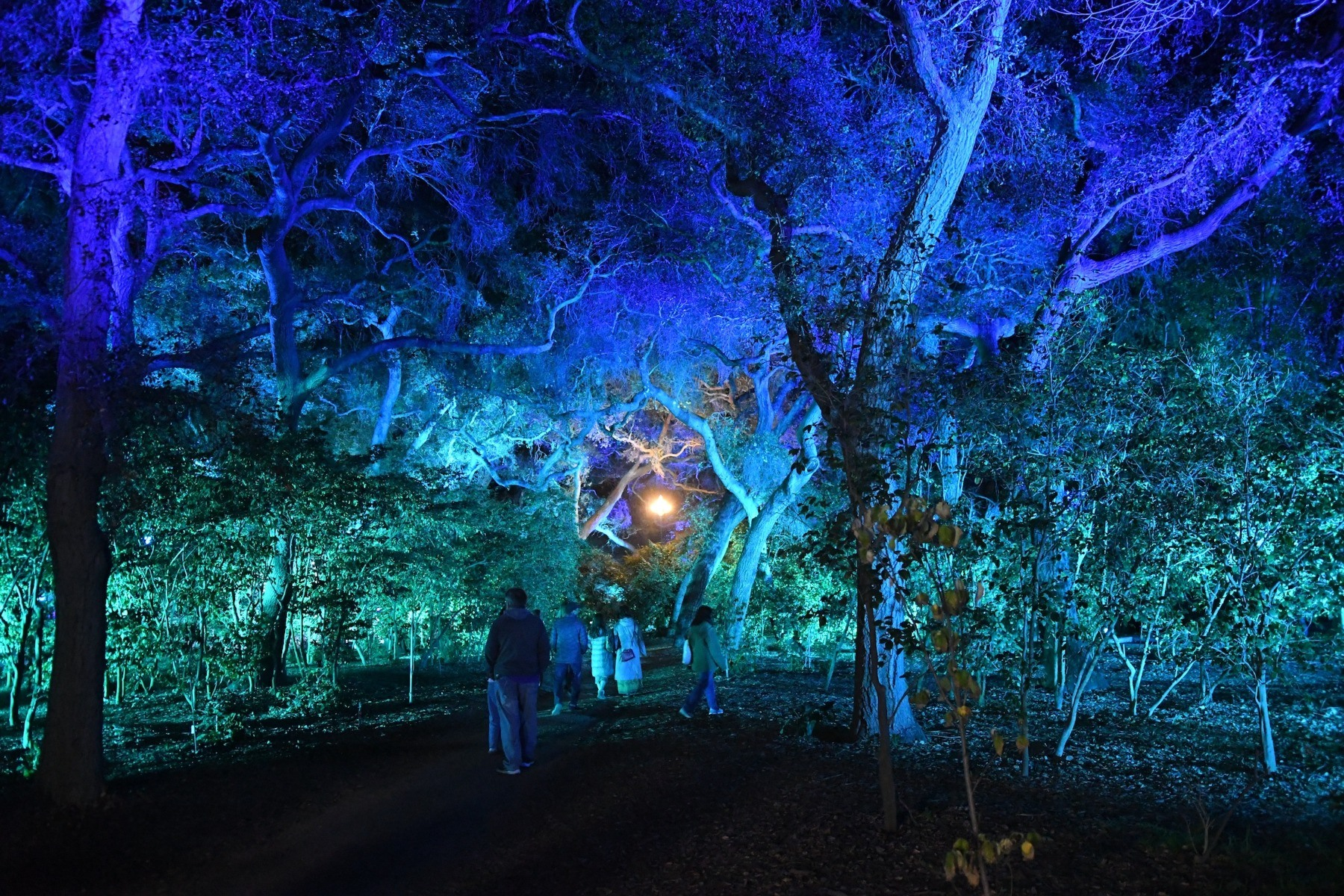 Lightswitch And Elation Lighting Magic At Descanso Gardens Enchanted Forest Of Light